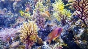 Kleurrijke koralen en vissen Stock Fotografie