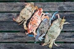 Kleurrijke Krab Stock Afbeelding