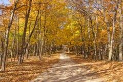 Kleurrijke Landelijke Weg in de herfst Stock Foto's