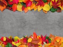 Kleurrijke leves op concrete achtergrond Stock Fotografie