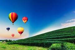 Kleurrijke luchtballonnen die over het landschap van de theeaanplanting vliegen Royalty-vrije Stock Afbeelding