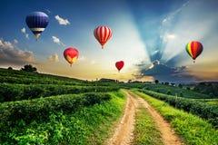 Kleurrijke luchtballonnen die over het landschap van de theeaanplanting vliegen royalty-vrije stock foto