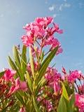 Kleurrijke mediterrane bloemen bij zonnige ochtend, Sithonia Stock Afbeeldingen