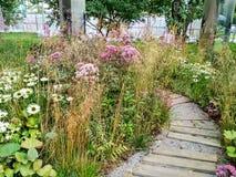 Kleurrijke mooie tuin Stock Fotografie
