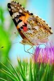 Kleurrijke mot Royalty-vrije Stock Afbeeldingen