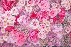 Kleurrijke multicolored sier van mooie roze rozen, madeliefje en gypsophila bloeiende patronen groepeert textuur op muur voor stock foto