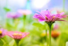 Kleurrijke ochtendbloemen Stock Afbeeldingen