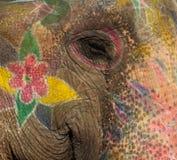 Kleurrijke olifant in Jaipur, Rajasthan, India stock foto's