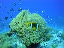 Kleurrijke onderwaterwereld van het Rode overzees royalty-vrije stock afbeelding