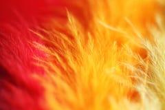 Kleurrijke Ondiepe Vogelveer royalty-vrije stock foto