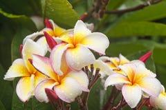 Kleurrijke Orchideeën na Regen Stock Afbeeldingen