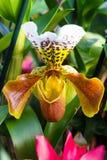 Kleurrijke Orchideeën van India Stock Fotografie