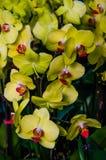 Kleurrijke Orchideeën van India Royalty-vrije Stock Afbeelding