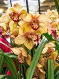 Kleurrijke orchideebloem Bloemen achtergrond royalty-vrije stock foto