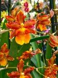 Kleurrijke orchideebloem Bloemen achtergrond stock afbeeldingen