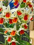 Kleurrijke orchideebloem Bloemen achtergrond royalty-vrije stock foto's