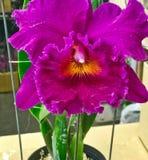 Kleurrijke orchideebloem Bloemen achtergrond royalty-vrije stock afbeelding