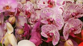Kleurrijke orchideebloemen op tentoonstelling in serre stock footage