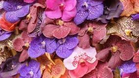 Kleurrijke orchideebloemen op tentoonstelling in serre stock videobeelden