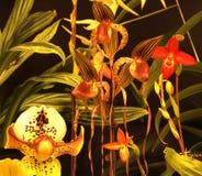 Kleurrijke orchideeën Royalty-vrije Stock Foto's