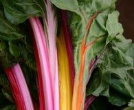 Kleurrijke Organische Snijbiet Stock Afbeeldingen