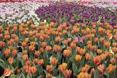 Kleurrijke Overzees van bloem om te ontspannen royalty-vrije stock fotografie