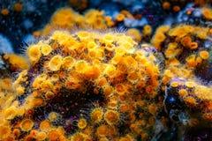 Kleurrijke overzeese schepselen royalty-vrije stock foto's