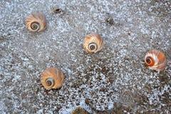 Kleurrijke overzeese slakken op bevroren strand Stock Fotografie