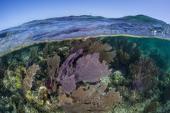Kleurrijke Overzeese Ventilators in Caraïbische Zee Stock Foto's