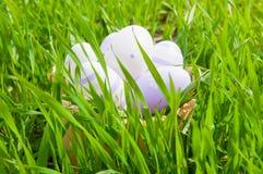 Kleurrijke paaseieren in een mand in het gras Stock Fotografie
