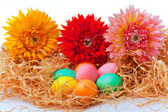 Kleurrijke paaseieren en bloemen Stock Foto