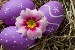 Kleurrijke paaseieren en primerose bloem in een nest Stock Afbeeldingen