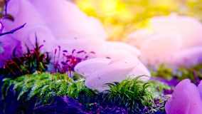 Kleurrijke paddestoelen stock fotografie