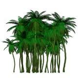 Kleurrijke palm Royalty-vrije Stock Afbeelding