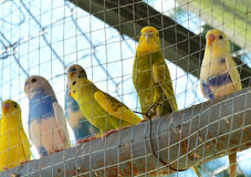 Kleurrijke papegaai Royalty-vrije Stock Foto