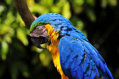 Kleurrijke Papegaai Stock Afbeeldingen