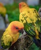 Kleurrijke papegaai op boomtak stock foto's