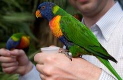 Kleurrijke papegaai op een hand Stock Foto's