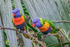 Kleurrijke papegaaien Royalty-vrije Stock Fotografie