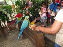 Kleurrijke Papegaaien, de Dierentuin van Manilla, Manilla, Filippijnen royalty-vrije stock afbeeldingen