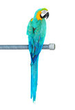Kleurrijke papegaaivogel op de toppositie stock fotografie