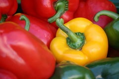 Kleurrijke paprika Royalty-vrije Stock Afbeeldingen