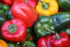Kleurrijke paprika Stock Foto