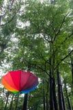 Kleurrijke paraplu en bomen Stock Afbeeldingen