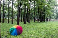 Kleurrijke paraplu en bomen Royalty-vrije Stock Afbeeldingen