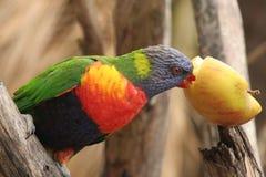 Kleurrijke parroton een tak Stock Afbeelding