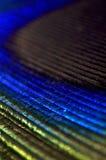 Kleurrijke pauwtextuur Stock Fotografie