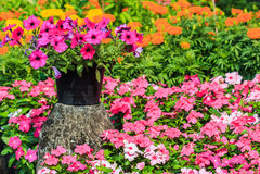 Kleurrijke petunia stock fotografie