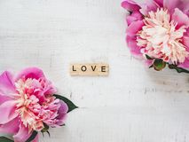Kleurrijke pioenen, woordliefde op een witte achtergrond stock afbeelding