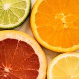 Kleurrijke plakken van de citrusvrucht van Florida Stock Afbeeldingen